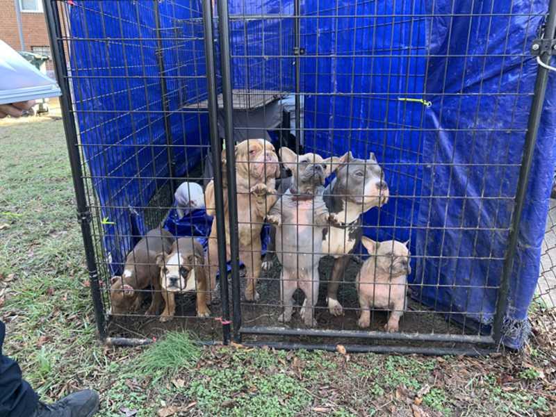 Morador é preso em Whashington (EUA) por negligenciar cuidados com 11 cães