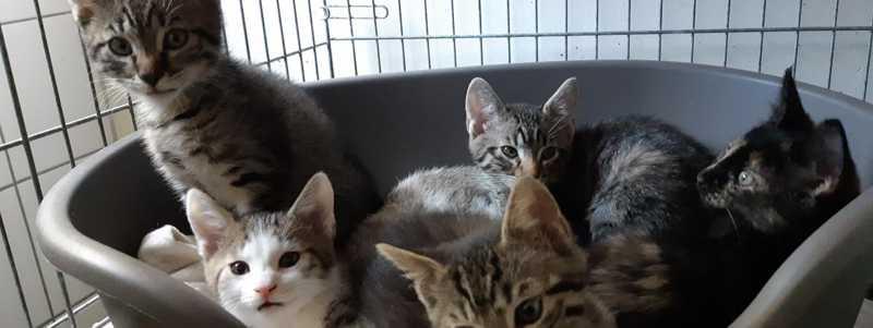Gatos em coma etílico, cães queimados com alvejante: não desinfetem seus animais contra o coronavírus, alertam os veterinários