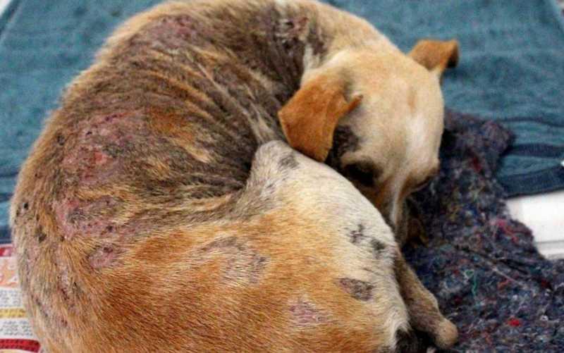 Goiânia não possui atendimento gratuito para animais abandonados ou de pessoas de baixa renda