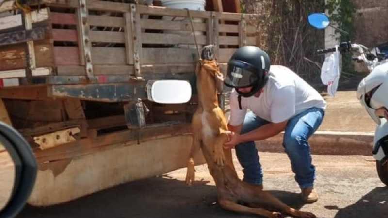 Homem é preso em flagrante ao arrastar cão com caminhonete de mudança, em Pontalina, GO