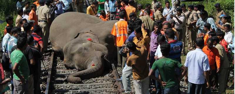 Índia utiliza som de abelhas para manter elefantes afastados dos trilhos de trens