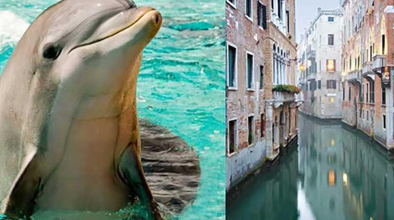É 'fake' a notícia sobre golfinho em canais de Veneza