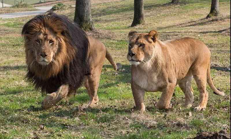 Zoológico italiano faz apelo para alimentar animais em meio ao confinamento