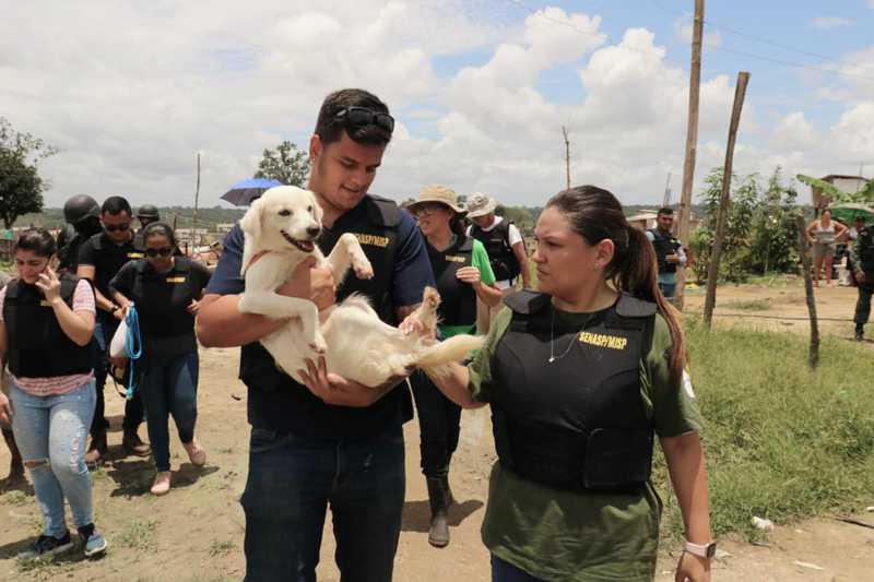 Manaus: animais resgatados na ocupação Monte Horebe precisam de lar temporário