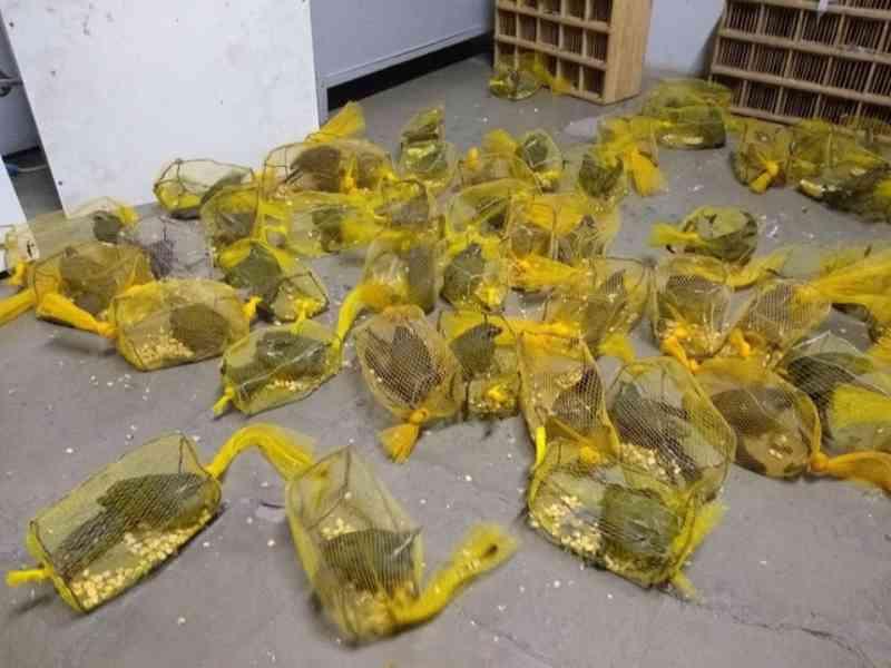 Suspeitos são multados por crime ambiental após apreensão de pássaros silvestres em Itamonte, MG