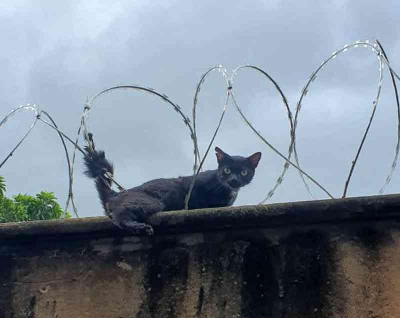 Bombeiros resgatam gato de concertina e outro de bueiro em Ituiutaba, MG