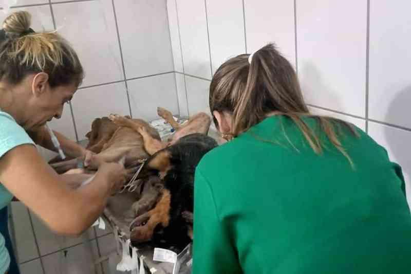 Massacre de cães em Ribeirão das Neves (MG): Polícia Civil não descarta motivação política