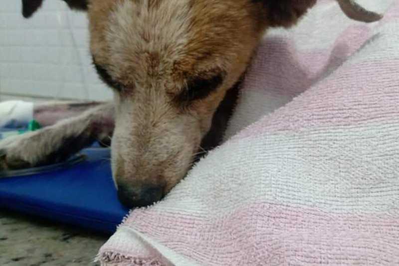 Cinquenta e nove cães morrem envenenados, e protetores denunciam massacre