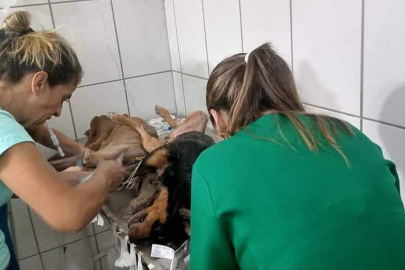 Quatorze animais foram socorridos para uma clínica veterinária, mas sete deles morreram; os outros estão em estado grave Foto: Arquivo pessoal