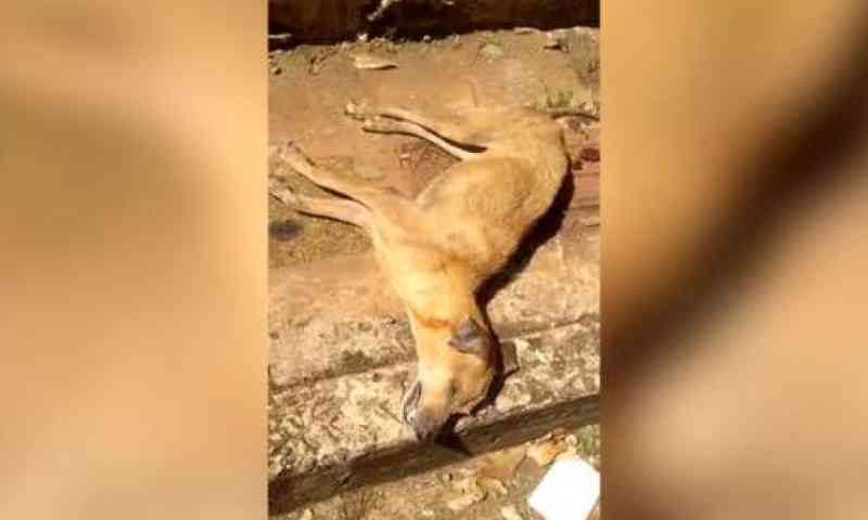 Crueldade: tutores viajam e cadela agoniza até a morte sem água e comida em MS