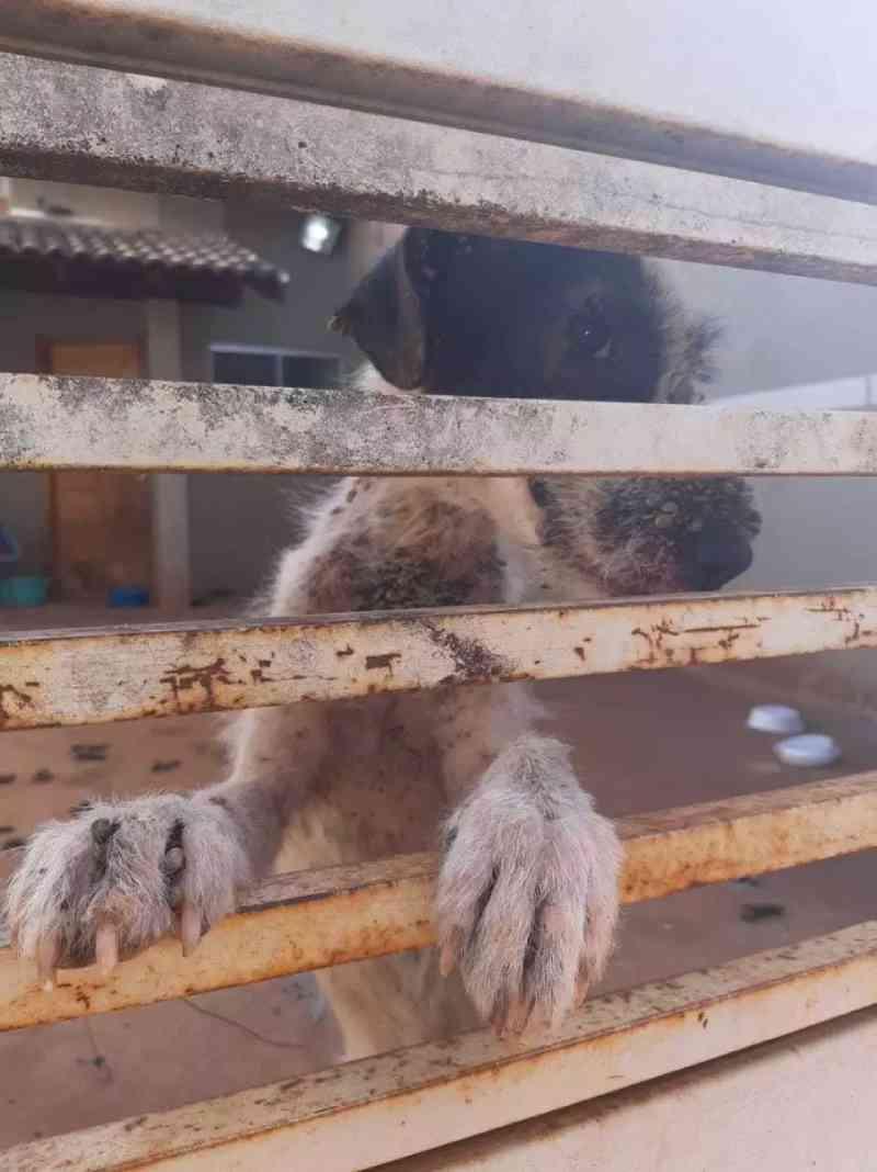 Mulher adota cão que sofria maus-tratos, mas animal não resiste à doença