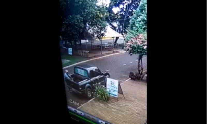 Câmera flagra homem abandonando gato em carroceria de caminhonete em Iguatemi, MS