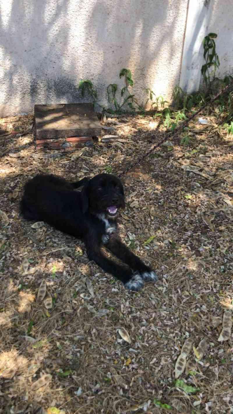 Durante investigações, polícia encontra cãozinho abandonado vítima de maus-tratos