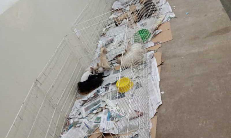 A situação dos animais, já deixava clara que a situação era no mínimo irregular - Foto: Divulgação/Assessoria