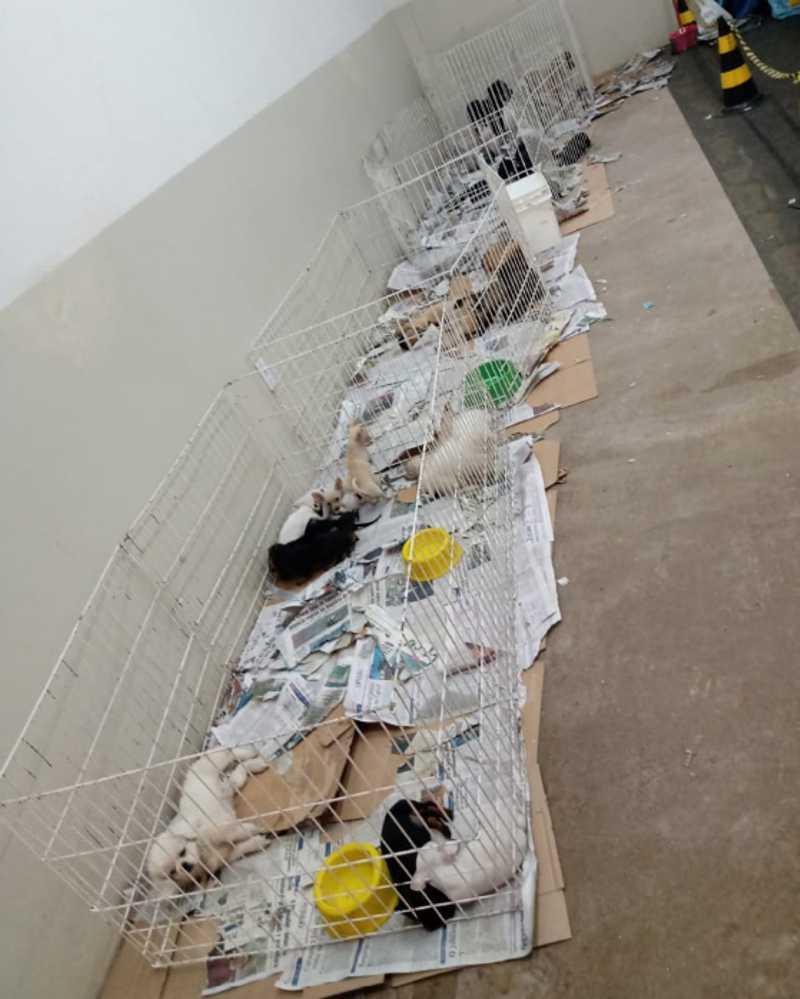 Feira de venda de animais é interditada após denúncia sobre más condições do local, em Dourados, MS