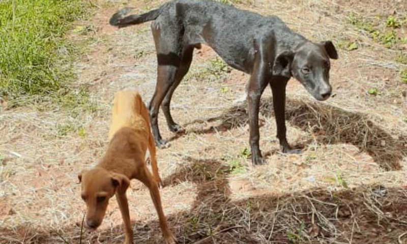 Cães vítimas de maus-tratos foram resgatados pela PMA e CCZ em Nova Andradina neste sábado (7) — Foto: PMA/Divulgação