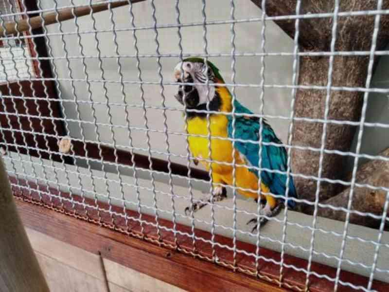 60 guardiões recebem guarda provisória para abrigar animais silvestres em residências, em Mato Grosso