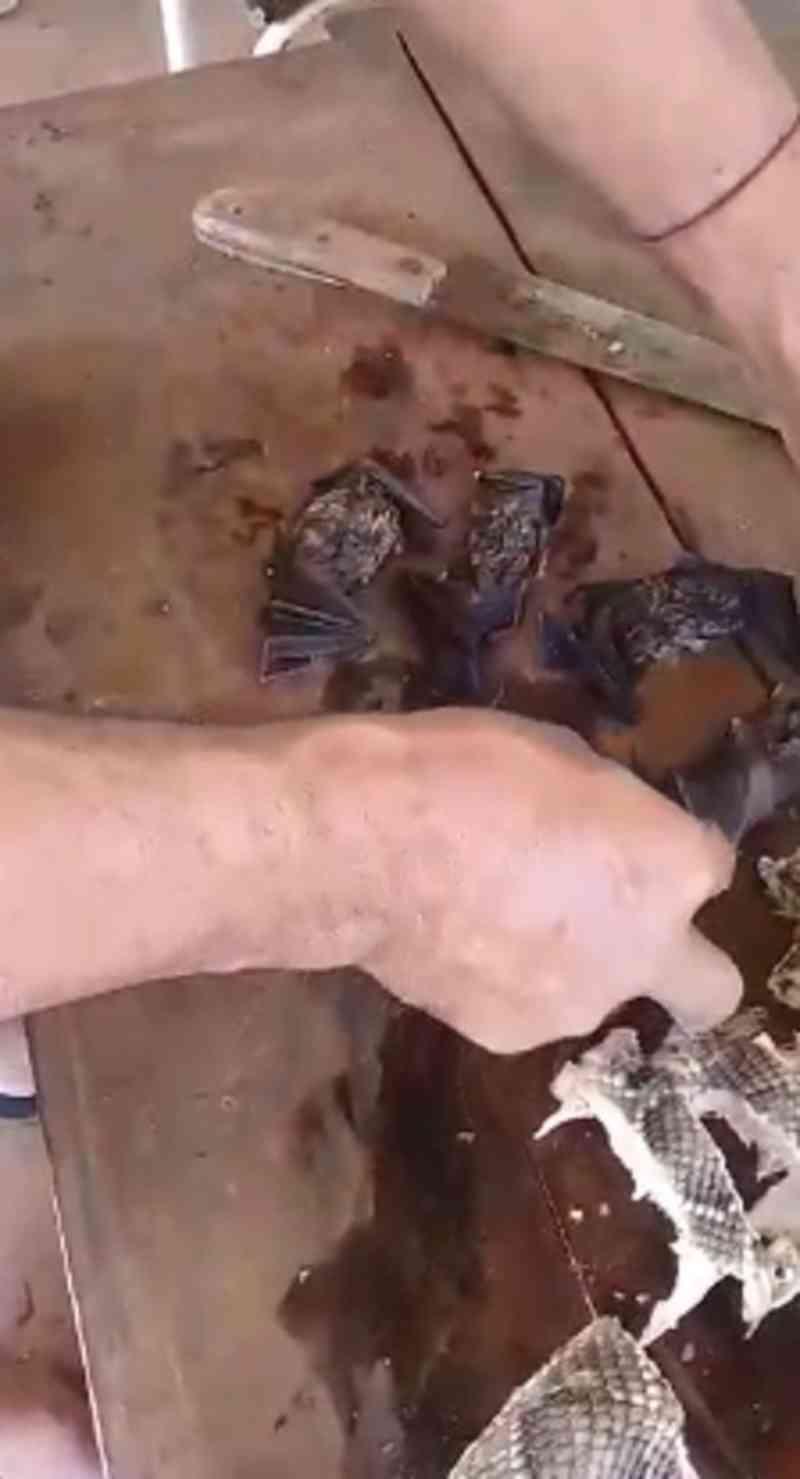 Morador é denunciado ao MP por crime ambiental depois de vídeo comendo cobra e morcego em MT