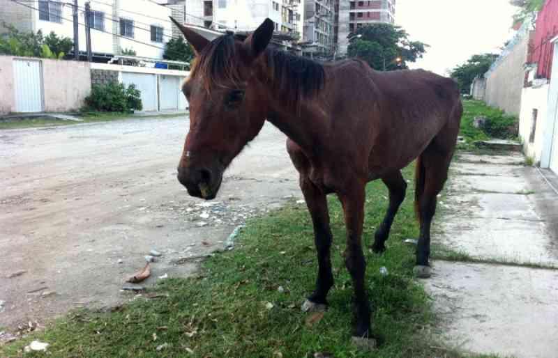 Homem é detido por maus-tratos a cavalo em Jaboatão dos Guararapes, PE