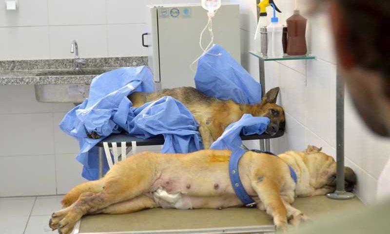 Hospital Veterinário do Recife oferece castração gratuita de cães e gatos — Foto: Luciano Ferreira/PCR/Divulgação