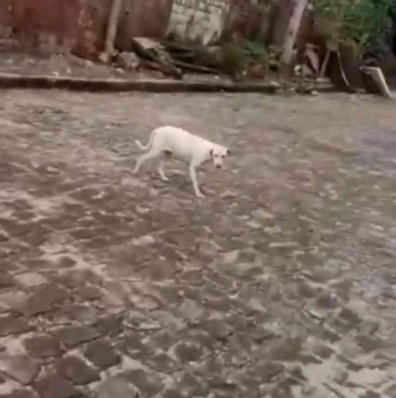 Vídeo: mulher abandona cão em ONG de Teresina (PI) e causa revolta nas redes sociais
