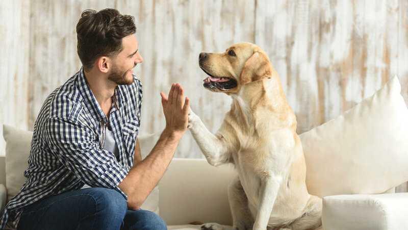 Ordem dos Veterinários de Portugal pede para não fazer do passeio do cão um evento social
