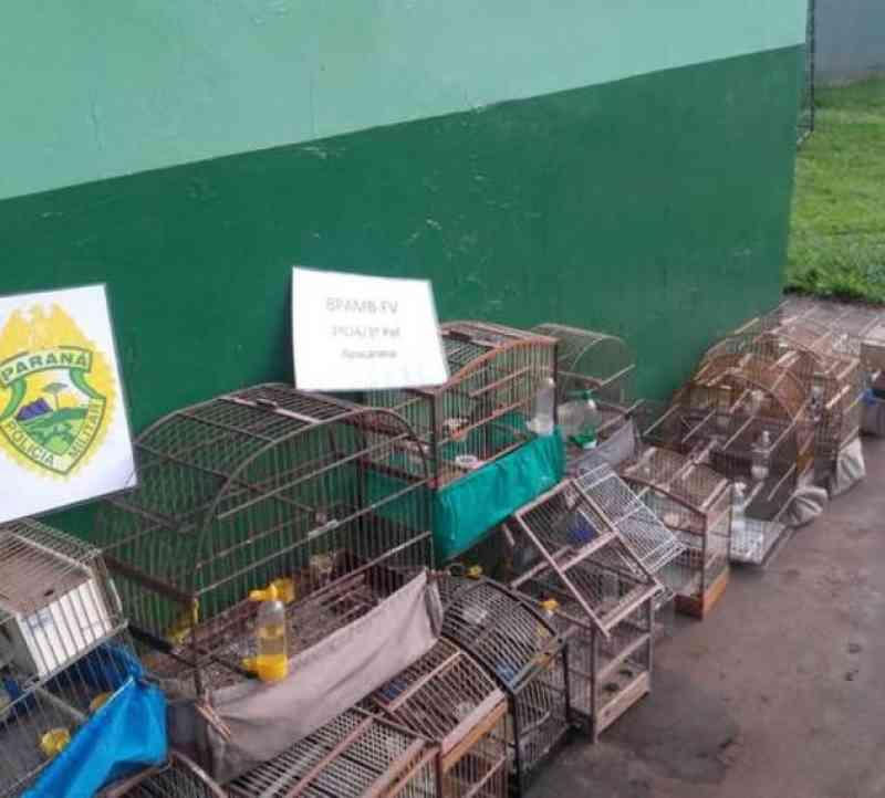Polícia Ambiental lavra R$ 277,5 mil em multas e apreende pássaros na região de Apucarana, PR