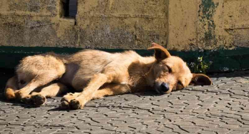 Cachorro amarrado morre por falta de água e comida em Chopinzinho, PR