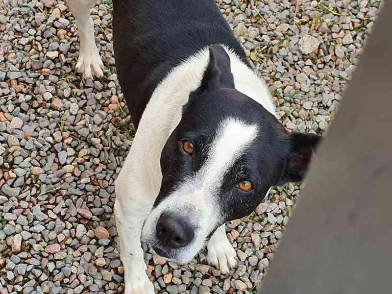 Curitiba: cachorros são envenenados no Boqueirão, e dois morrem