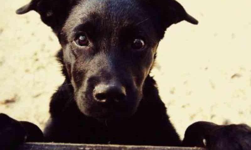 Cães presos em saco são encontrados dentro de caminhonete no centro de Ivaiporã, PR
