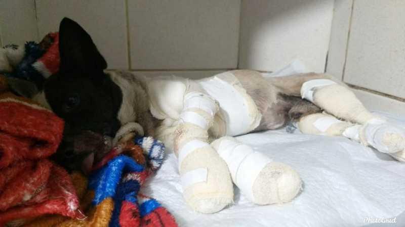 Morre cachorro que foi amarrado e arrastado por caminhonete, em Campo Mourão, PR