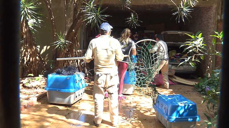 Equipes do setor de bem-estar animal, da Vigilância Sanitária e da Guarda Municipal estiveram no local para fazer o resgate, em Londrina — Foto: Ademir Santos/RPC