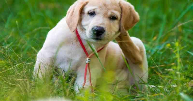 Portugal: Braga apela ao não abandono de animais de estimação e oferece apoio