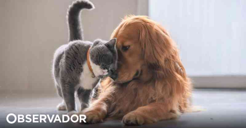 Portugal: PAN e BE querem animais vítimas de violência à guarda do Estado