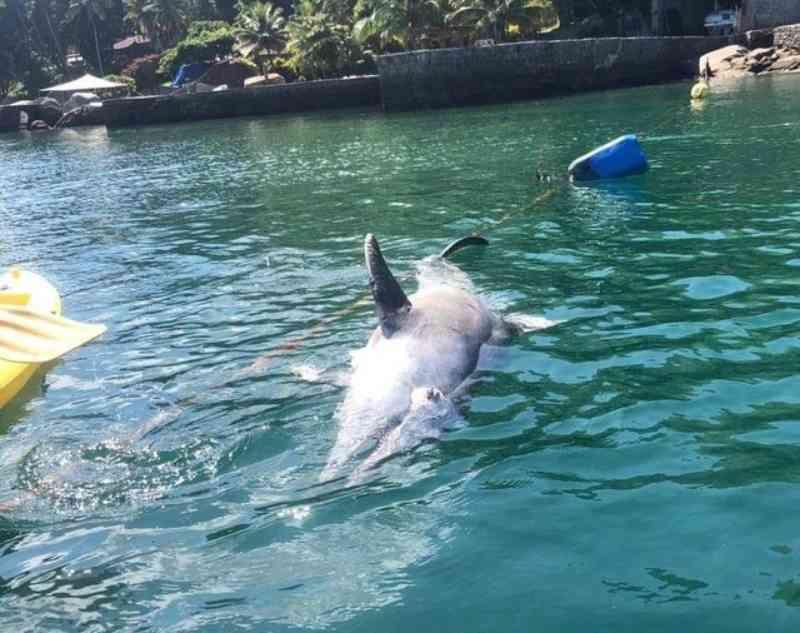 Morre golfinho que interagia com banhistas em Angra dos Reis, RJ