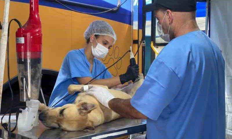 Castramóvel atende cerca de 200 animais de Itaipuaçu, em Maricá, RJ