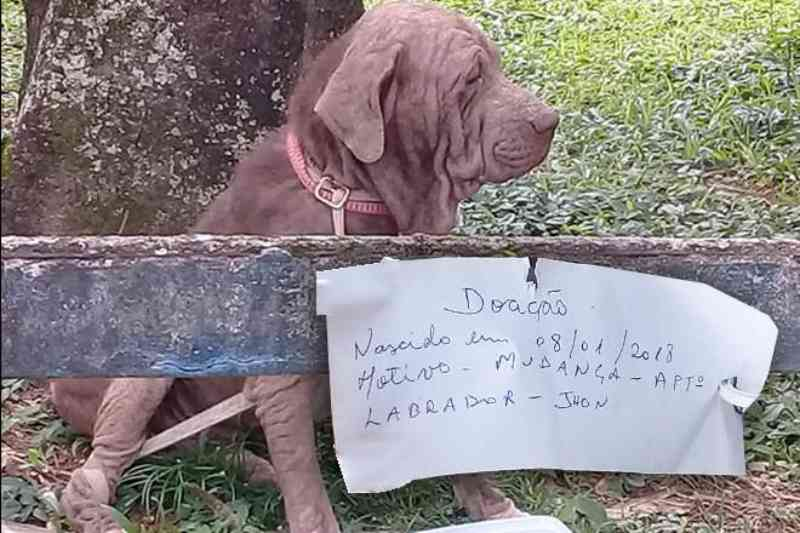 Amarrado em árvore, cachorro é abandonado com bilhete, no RJ