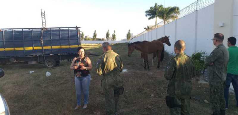 Combate à carroça tração animal começa em Campos, RJ; MP expede recomendação