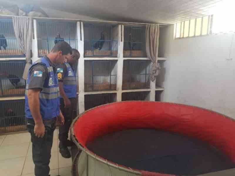 Cinco detidos e quase 100 animais apreendidos em rinha de galo no Noroeste Fluminense