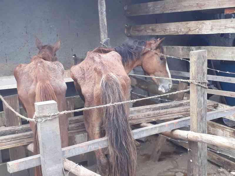 Prefeitura do Rio recolhe animais abandonados em terreno de Campo Grande