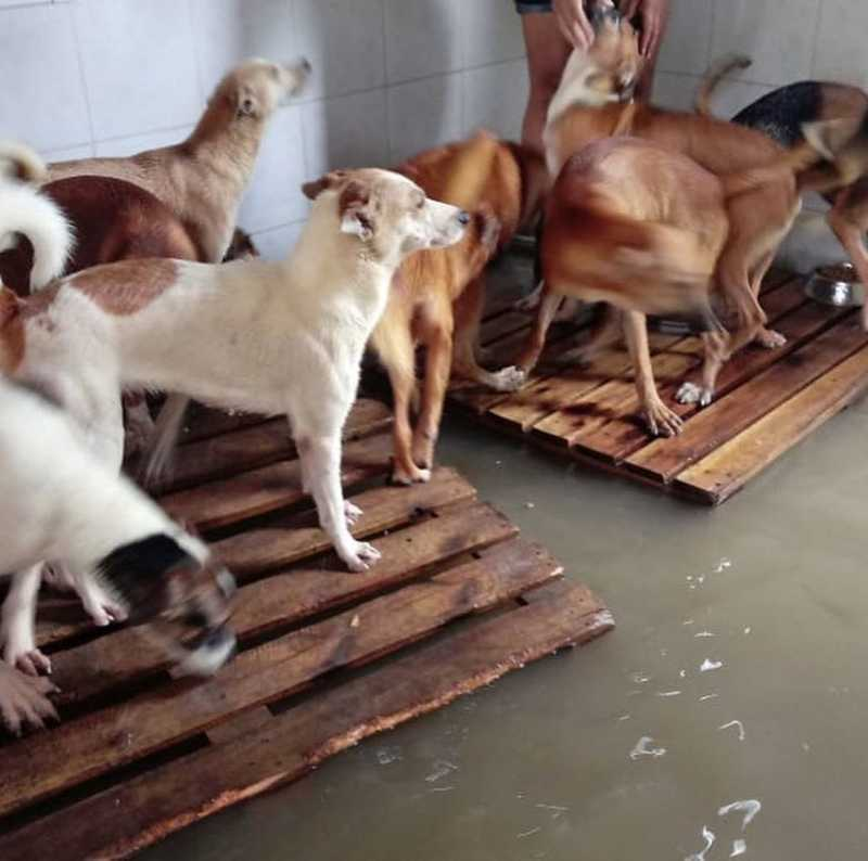Forte chuva inunda abrigo de animais na zona oeste do Rio