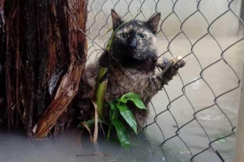 Pontos de coleta para doações: ajude os animais que sofrem com as enchentes no Rio de Janeiro