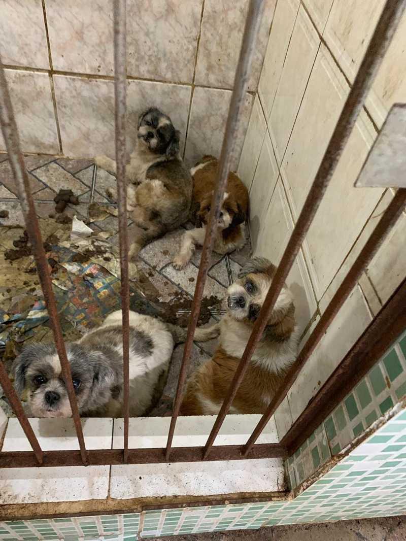 Governador do RJ sanciona lei que prevê criação de delegacia de combate aos maus-tratos contra animais no RJ
