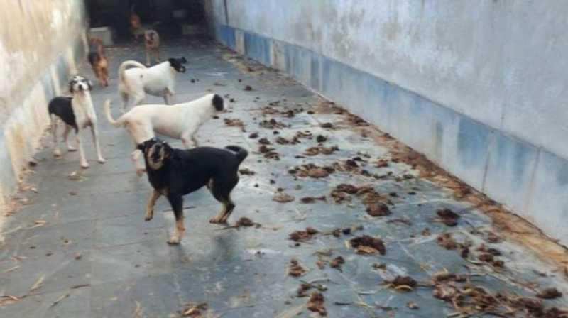 Cachorros urinando sangue e cães mortos em freezer são encontrados em casa de ex-presidente da ONG Suipa, no Rio