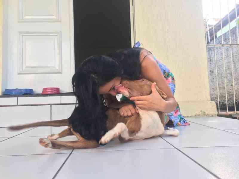 Casal adota pit bull com deficiência abandonado em estrada: 'Amor à primeira vista'