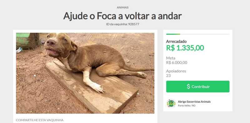 Vaquinha online foi aberta para juntar o dinheiro necessário para o tratamento do pitbull resgatado — Foto: Reprodução