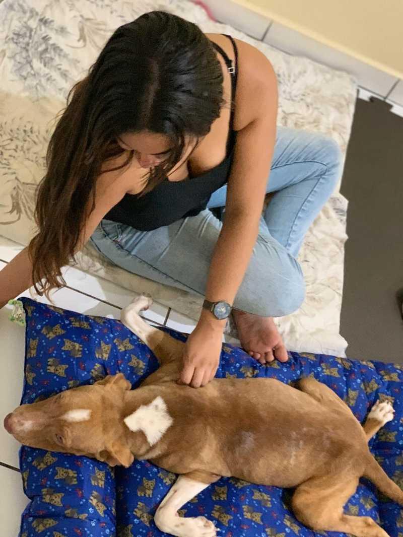Benjamin com a nova tutora, Michele Taborga, que deu um lar ao cachorro. — Foto: Michele Taborga/Arquivo Pessoal