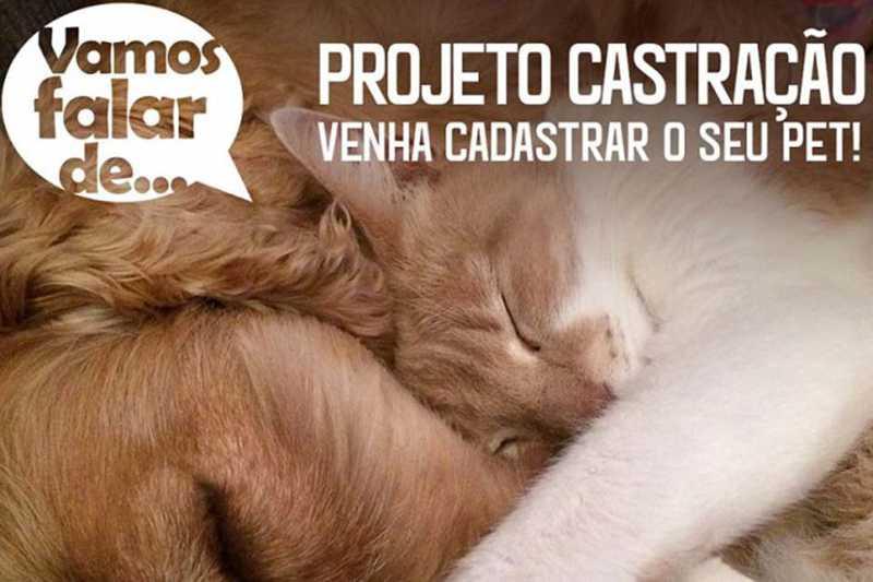 Cadastro para castração de animais em Porto Velho (RO) será somente por telefone a partir desta quarta-feira