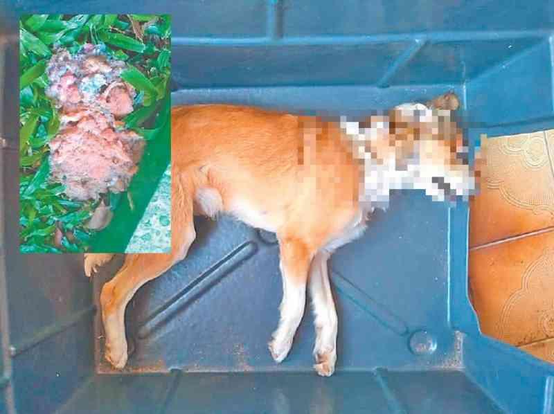 Polícia está investigando morte de mais um cão por envenenamento em Ivoti, RS