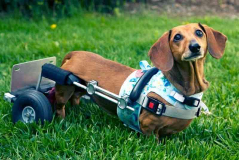 Voluntários da causa animal vão promover em Santiago (RS) Encontro de Animais com Deficiência